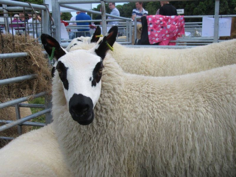 Castlewellan Show – A Great Day Out for the Whole Family
